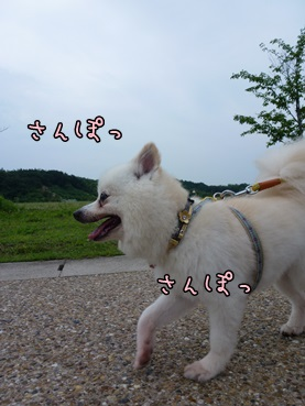 azuki20140624.jpg