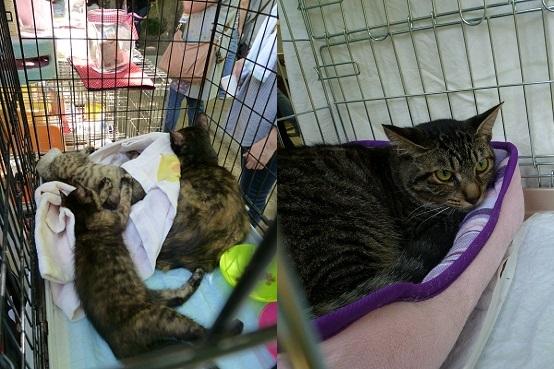 cats140608_3-horz.jpg