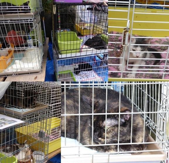 cats140824-horz-vert.jpg