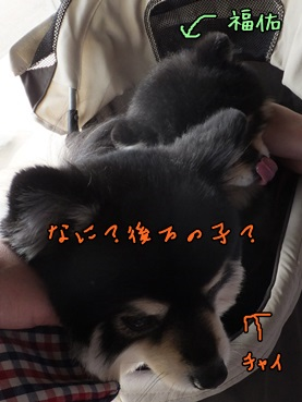 chaifuku140316_8.jpg