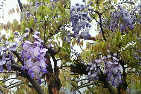 fuji140421_2-horz.jpg