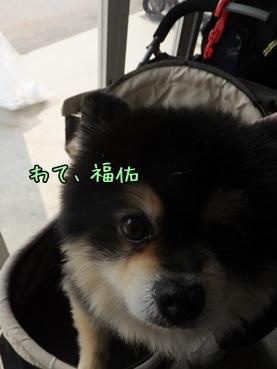 fukusuke140316_c.jpg