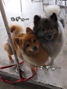 harukoto140316_mgu.jpg
