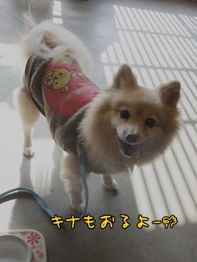 kinako140302.jpg