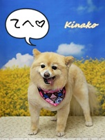 kinako140316go.jpg