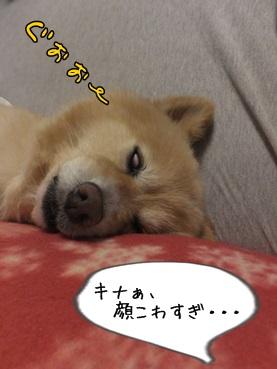 kinako140501_2b.jpg