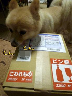 kinako140627.jpg