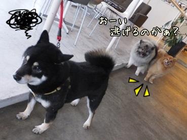 sugukoto140316.jpg