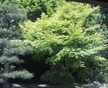 萬福寺新緑
