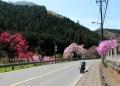 カラフルな花は何? 成木にて