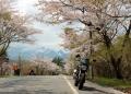桜が咲いてた 富士山スカイライン
