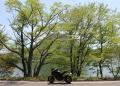 榛名湖の新緑