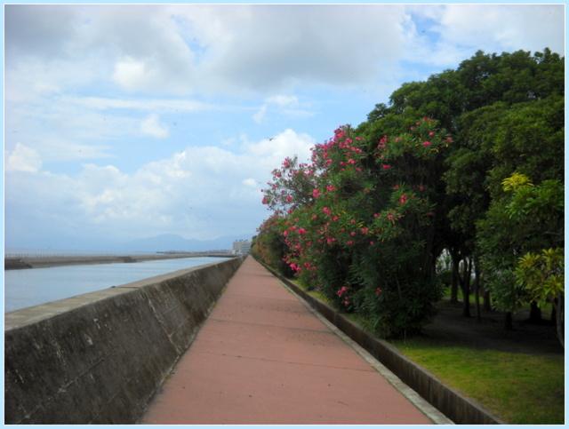 夾竹桃の咲く遊歩道