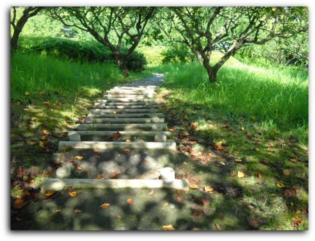 日本庭園への階段