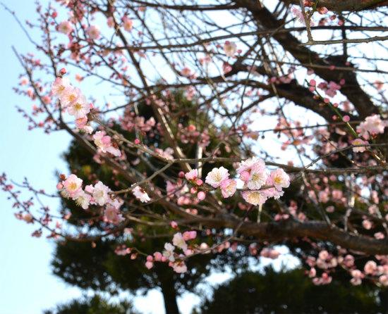 2014.02.28花見3