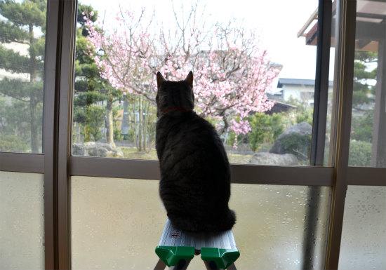 2014.02.28花見