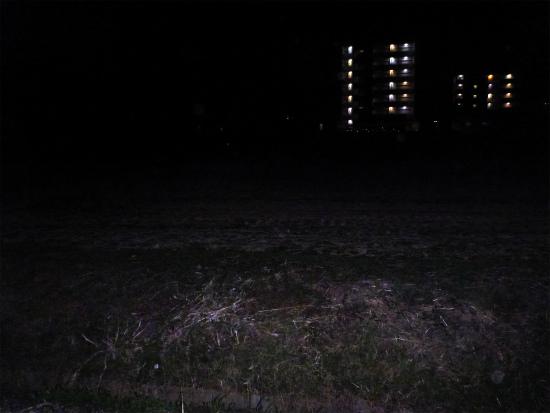 2014.03.07夜鴨