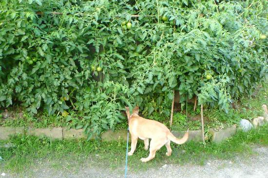 2014.07.13収穫2