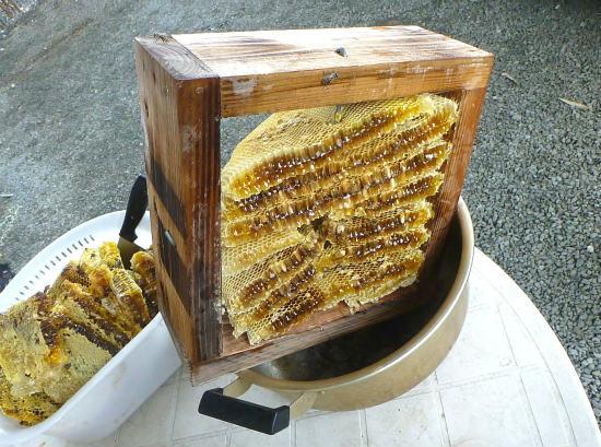 2014.07.20蜂蜜