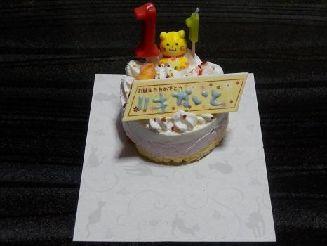 猫用ケーキ2