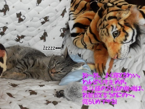 XN0qACBjub8F2vB1406506773_1406507678.jpg