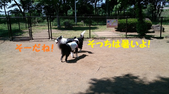 s-DSC_0186.jpg