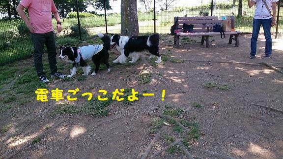 s-DSC_0210.jpg