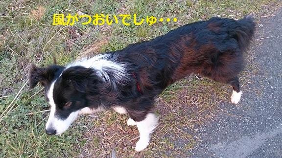 s-IMG_20140325_194907.jpg