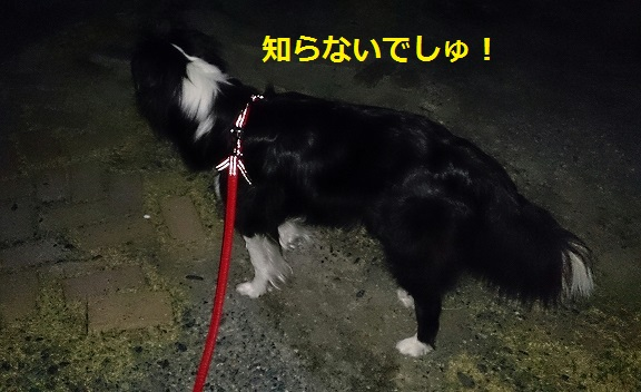 s-IMG_20140326_191409.jpg
