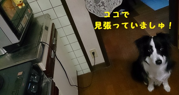 s-IMG_20140330_155150.jpg