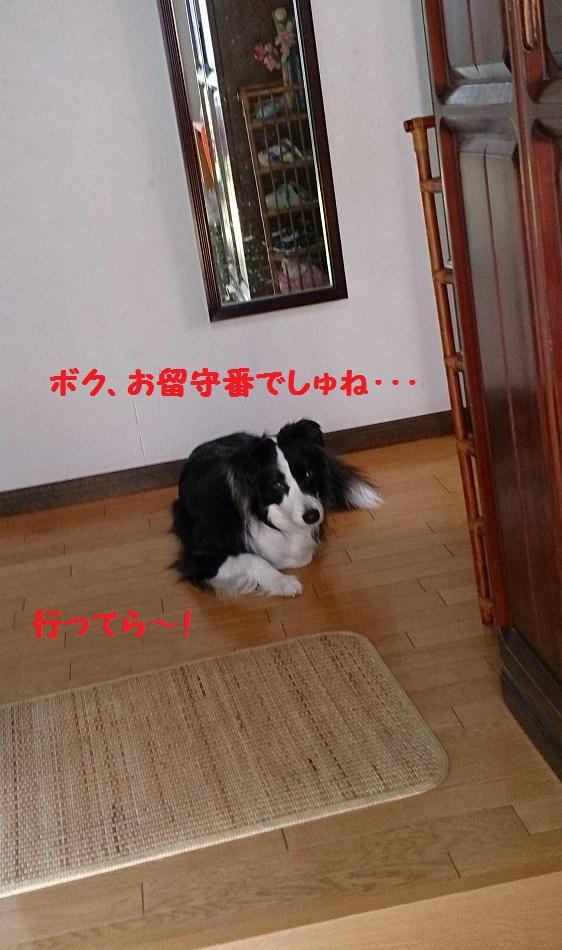 s-IMG_20140425_200516.jpg