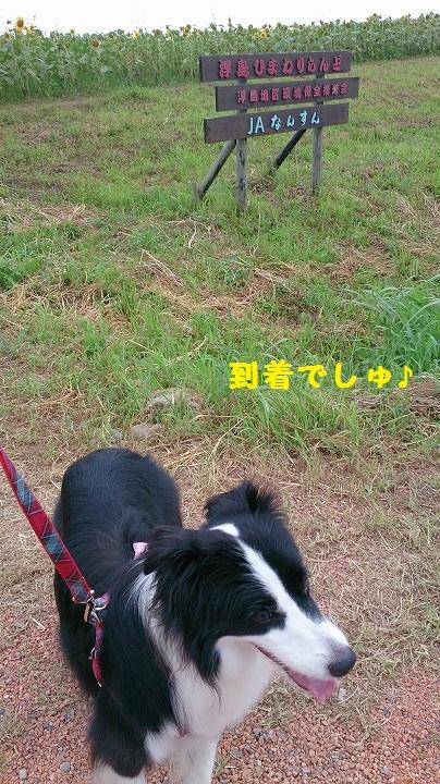 s-IMG_20140726_183841.jpg