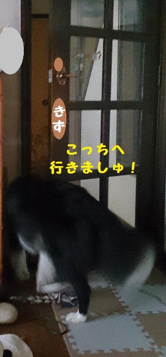 s-IMG_20140727_194801.jpg