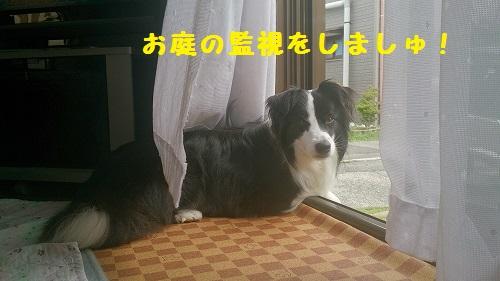 s-IMG_20140803_142146.jpg