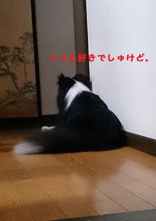 s-IMG_20140812_161512.jpg
