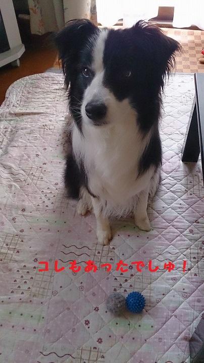 s-IMG_20140820_193619.jpg