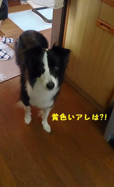 s-IMG_20140915_202755.jpg
