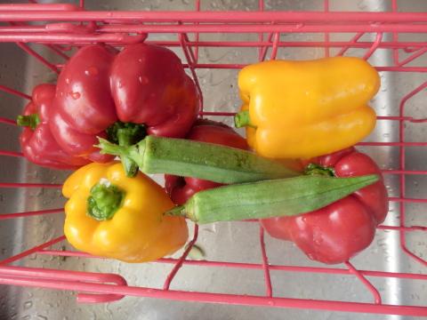 朝撮れ野菜