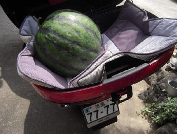 watermelon3-2.jpg