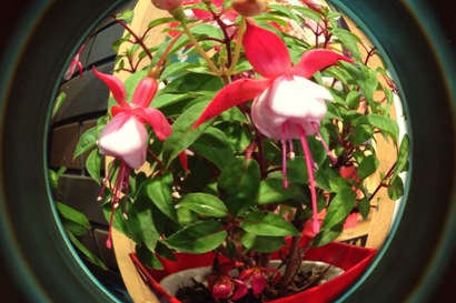花やしき花