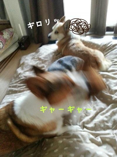 アイちゃん劇場②