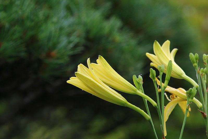 yusuge4-081.jpg