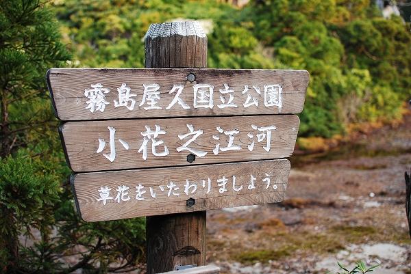 YAKU1DSC_0678.jpg