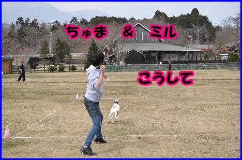 DSC_1200_20140402232532f53.jpg