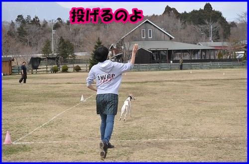 DSC_1201_20140402232533c4c.jpg