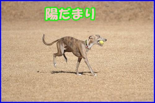 DSC_2629_20140222010817f7a.jpg