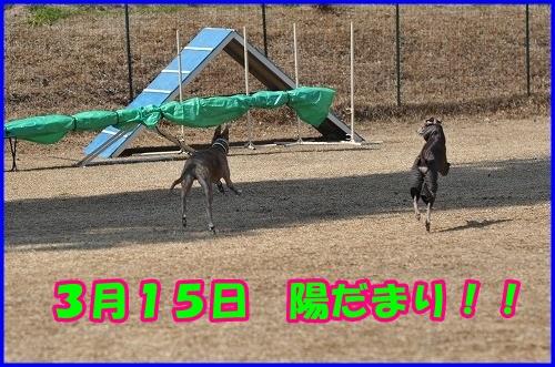 DSC_2852_20140316232330ce2.jpg