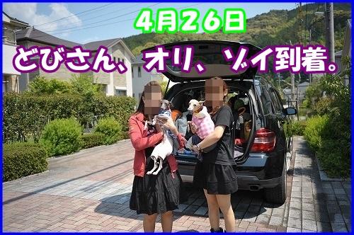 DSC_3300_20140428024114bb3.jpg