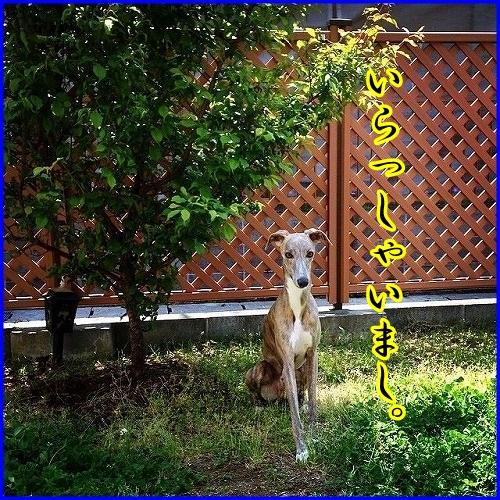 DSC_3330_20140428024115553.jpg