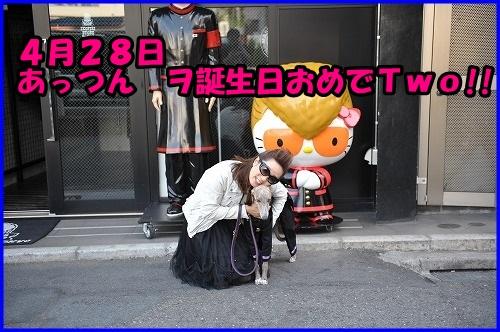 DSC_3500_20140428024300385.jpg